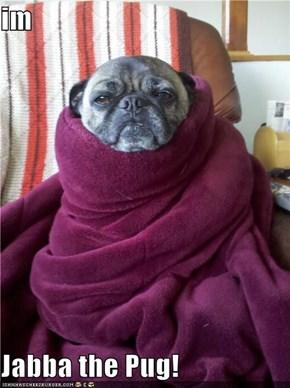 im   Jabba the Pug!