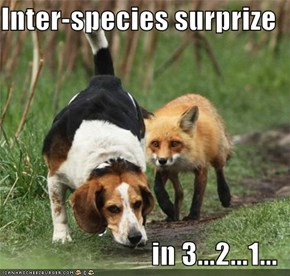 Inter-species surprize  in 3...2...1...