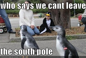who says we cant leave   the south pole