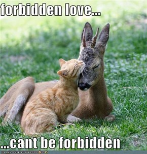 forbidden love...  ...cant be forbidden