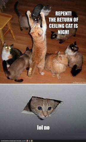 Ceiling Cat, Y U Troll Us So Hard?