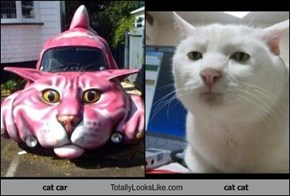 cat car Totally Looks Like cat cat