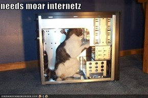 needs moar internetz