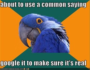 Paranoid Parrot: That's the Way the Google Searches