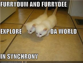 FURRYDUM AND FURRYDEE EXPLORE                       DA WORLD IN SYNCHRONY