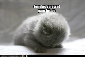 Somebody pressed paws button