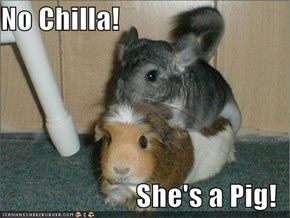 No Chilla!  She's a Pig!