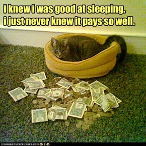 i knew i was good at sleeping. i just never knew it pays so well.