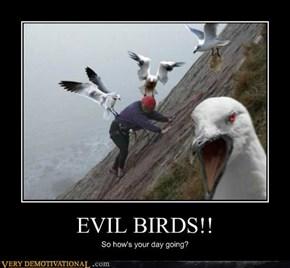 EVIL BIRDS!!