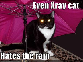 Even Xray cat  Hates the rain