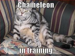 Chameleon  in training