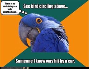 See bird circling above...