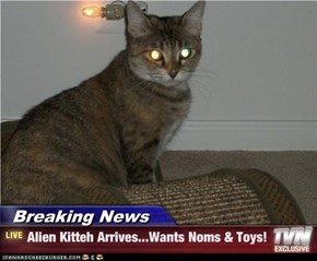 Breaking News - Alien Kitteh Arrives...Wants Noms & Toys!