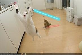 Jedi cat tricks