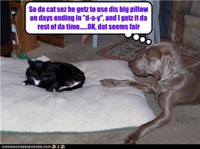 "So da cat sez he getz to use dis big pillow on days ending in ""d-a-y"", and I getz it da rest of da time......OK, dat seems fair"