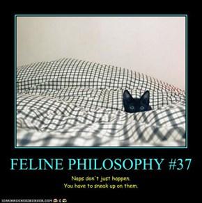 FELINE PHILOSOPHY #37