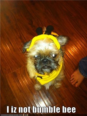 I iz not bumble bee