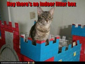 Hey there's no indoor litter box