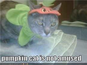 pumpkin cat is not amused