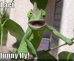 I aet  funny fly!
