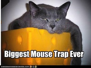Biggest Mouse Trap Ever