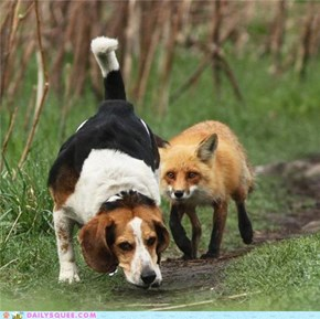 The Fox and the Hound WIN