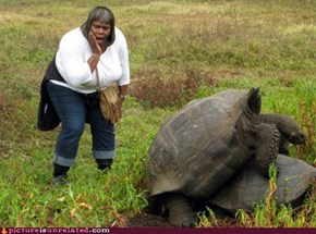 DAYUM, Them Turtles Be Humpin'!