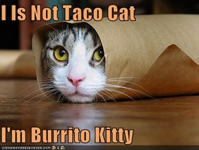 I Is Not Taco Cat  I'm Burrito Kitty