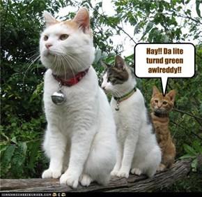 Hay!! Da lite turnd green awlreddy!!