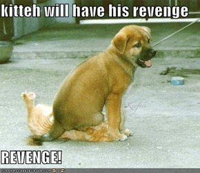 kitteh will have his revenge  REVENGE!