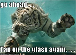 go ahead. . .  Tap on the glass again. . . .
