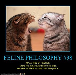 FELINE PHILOSOPHY #38