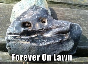 Forever On Lawn