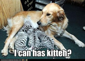 I can has kitteh?