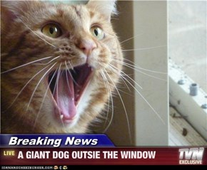 Breaking News - A GIANT DOG OUTSIE THE WINDOW