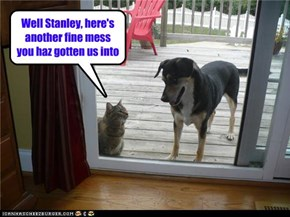 Well Stanley, here's another fine mess you haz gotten us into
