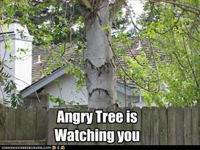 Angry Tree is Watching you