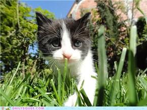 I Wanna be a Big Kitty!