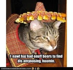 I  nawt haz had enuff beers tu find dis amyoosing, hoomin.