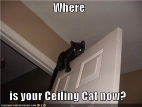 Where  is your Ceiling Cat now?