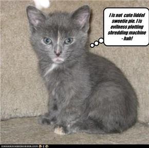 I is not  cute liddel sweetie pie. I is evilness plotting shredding machine - hah!