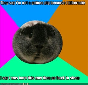They say i'm not a guinea pig because I hibernate  I say I was born this way then go back to sleep