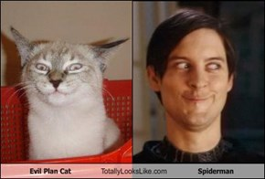 Evil Plan Cat Totally Looks Like Spiderman