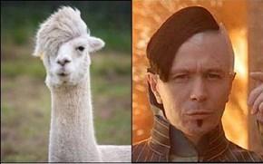 Alpaca Totally Looks Like Gary Oldman as Zorg