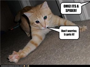 OMG! ITS A SPIDER!