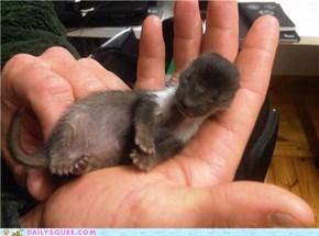 baby marten