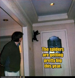 The spiders  are getting  pretty big  this year.