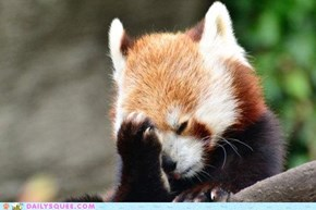 Acting Like Animals: FACE. PALM.