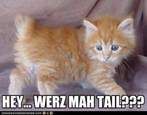 HEY... WERZ MAH TAIL???