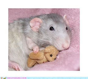 Ratty and teddy